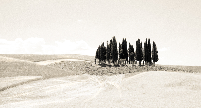cypress, Val d'Orcia