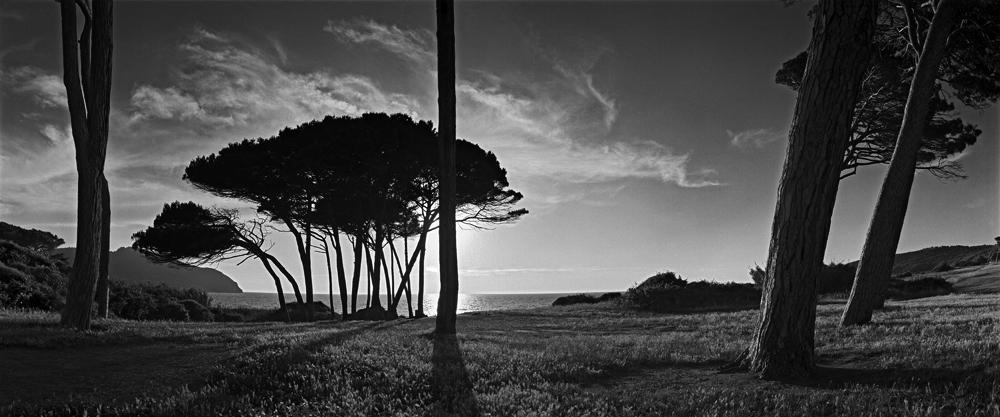 stone pines, Tuscany