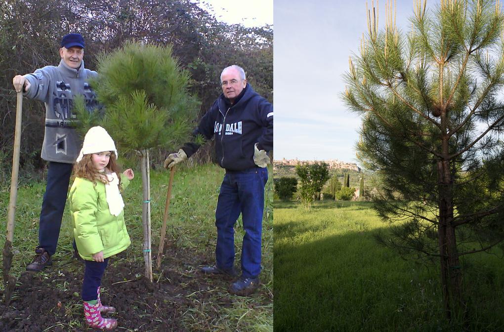 pine_planting comp_Orvieto.Tamburino.PatrickNicholas-00274