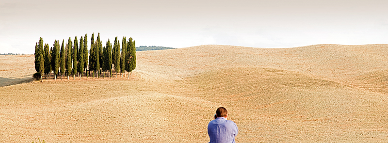 Cypress Grove near Sienna