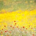 Photo workshop during the wildflowers season