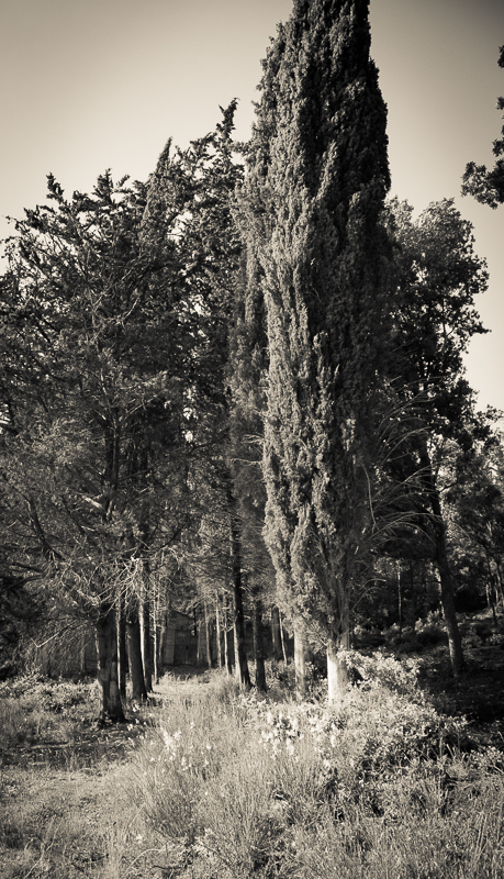 cemetery.chianti_PatrickNicholas-1263