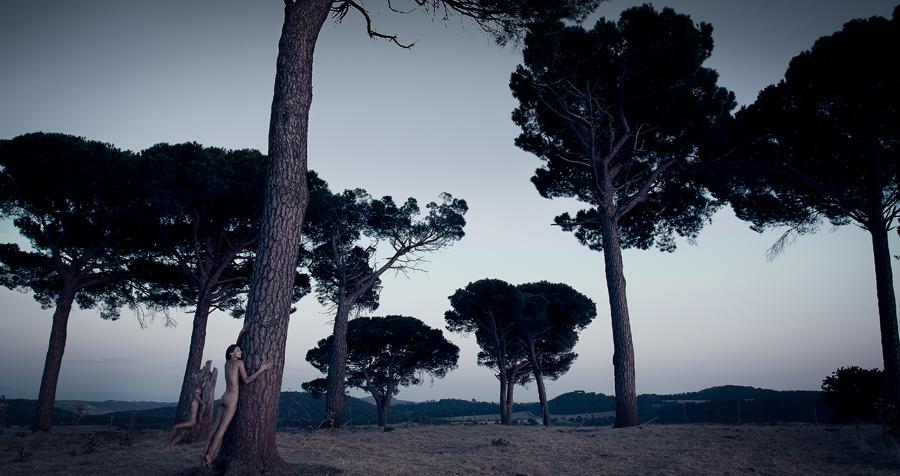 Hamadryads.umbrella_pines
