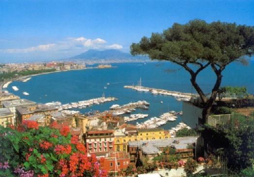 Naples pine