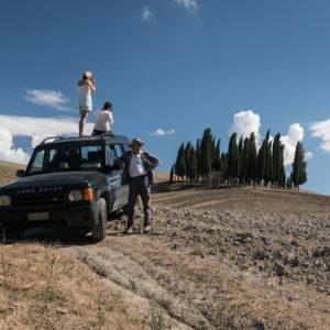 Tuscan Cypresses
